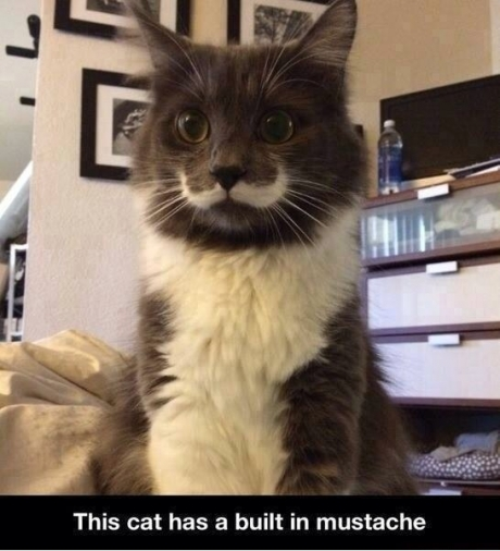 Built in muostache